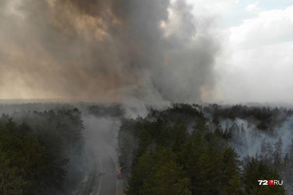 Где-то деревья горели снизу, где-то по центру, а где-то огонь добирался до крон. Верховой пожар самый страшный, потушить его крайне сложно