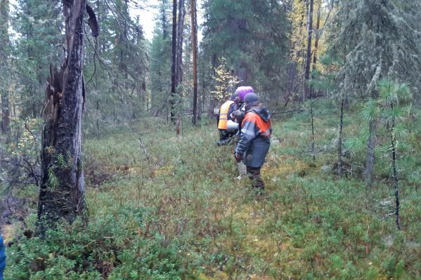 Югорчане уходят в глубь леса и потом не могут выйти к дороге