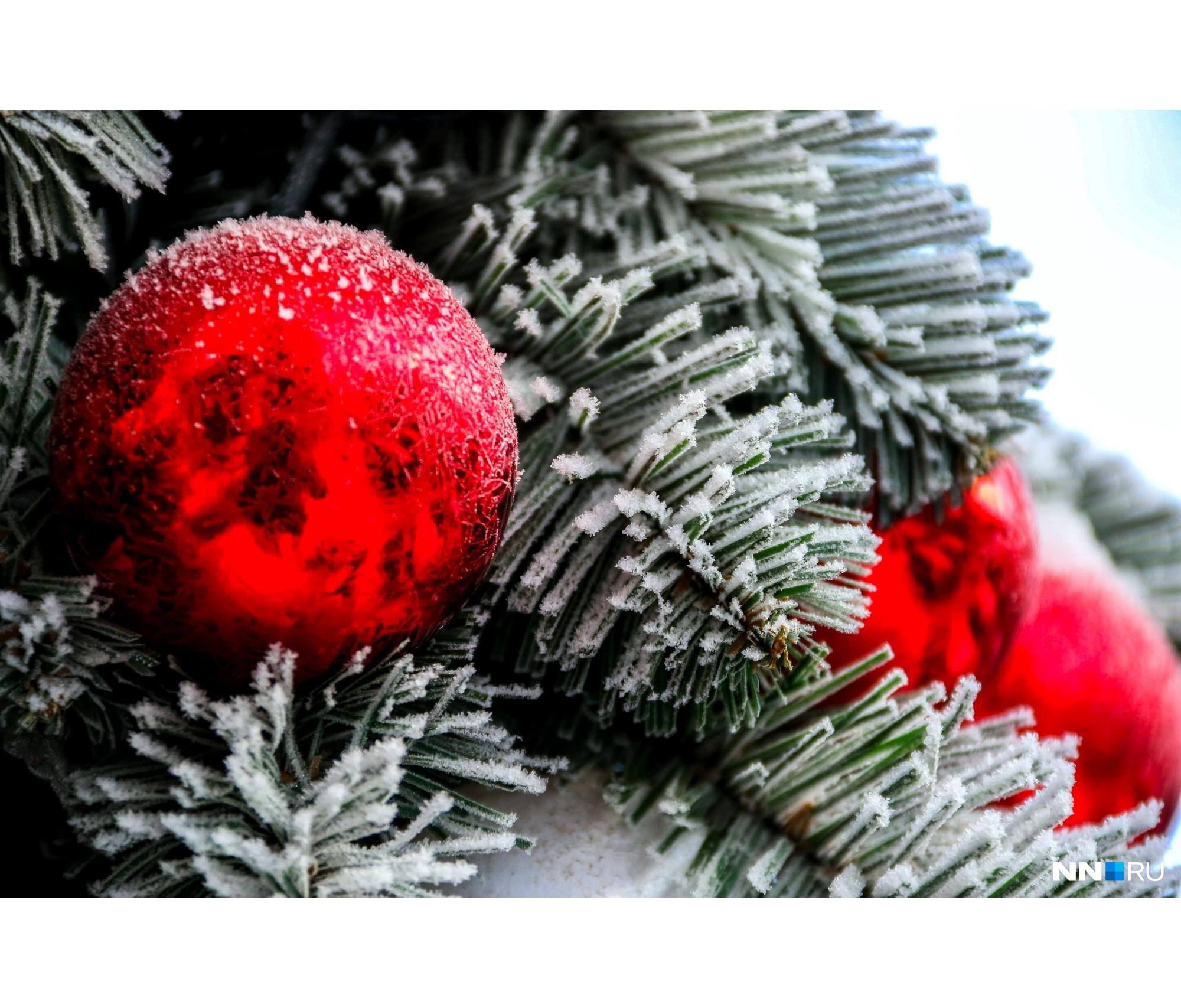 Даже новогодние елки стали выглядеть еще красивее