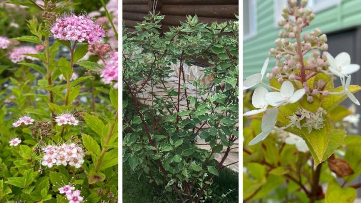 Что посадить на даче, чтобы много не ухаживать: пять красивых и неприхотливых растений