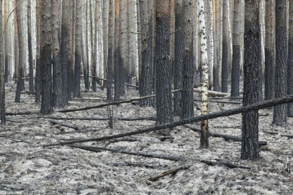 В Тюменской области преобладали низовые пожары. Почва была очень сухой из-за малоснежной зимы