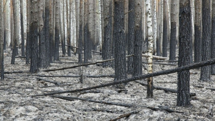 Власти рассказали, сколько животных погибло из-за лесных пожаров в Тюменской области (вы удивитесь)