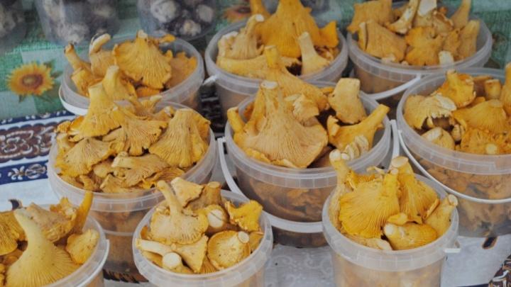 Уличные рынки ломятся от лесных ягод и грибов. Показываем, что и за сколько там можно купить
