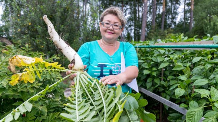 Автополив и просроченные таблетки: красноярские садоводы поделились секретами богатого урожая