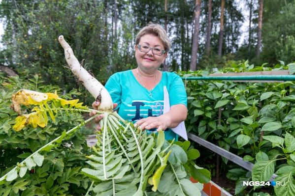 Вместо маленькой редиски Наталья Золотухина выращивает дайкон — его можно посадить всего несколько штук и хватит на весь сезон