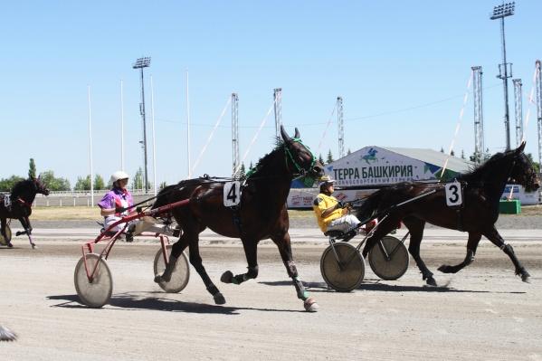 Полюбоваться конными скачками можно будет в эту субботу на ипподроме «Акбузат»