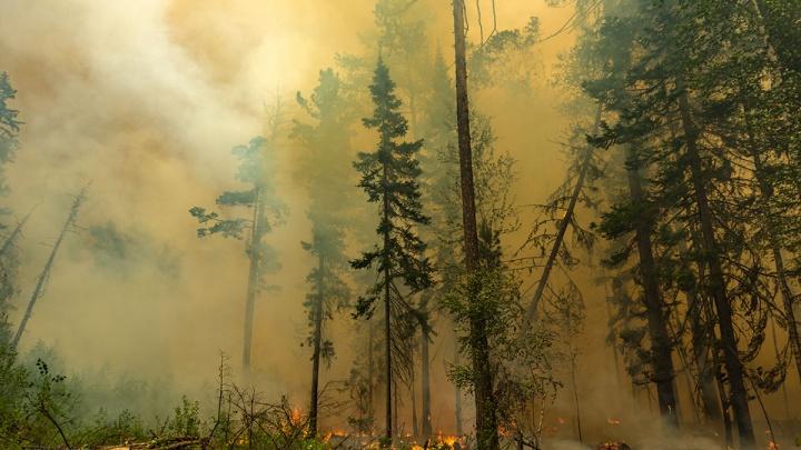 Тушение лесных пожаров с воздуха в этом году оценили в 168 тысяч рублей за летный час