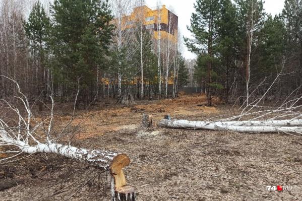 """Деревья снесли на участке около дома на улице Хариса <nobr class=""""_"""">Юсупова, 62</nobr>"""