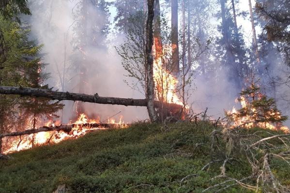 Пожар должны потушить к 17 часам 10 июня