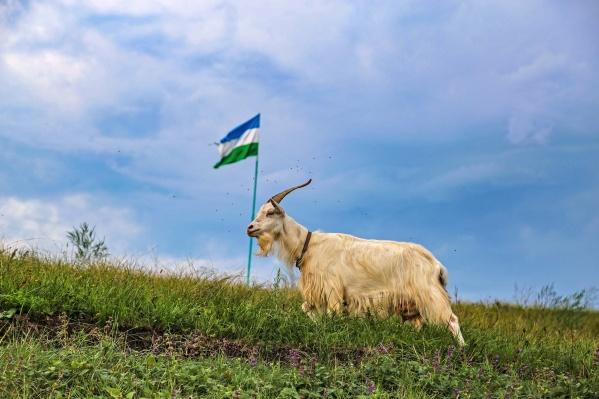 ЗБС — это зеленый, белый и синий, а не то, что вы подумали. Башкирский флаг действительно красивый — посмотрите, как органично сочетается с природными красками