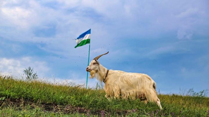 День флага Башкирии: рассказываем все секреты появления главного символа