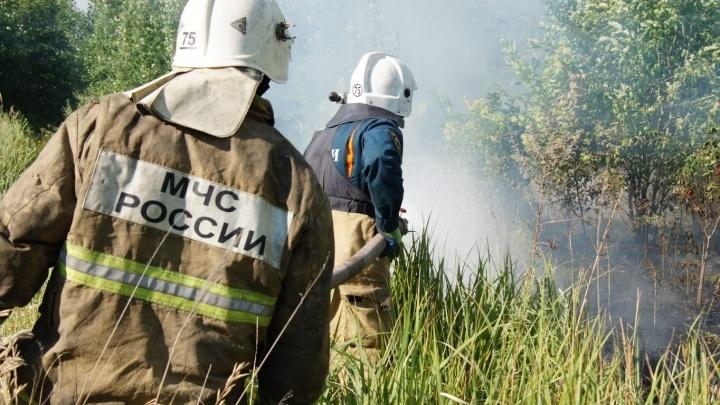 «Убили легкие Тольятти»: кто ответит за крупный пожар в автограде?