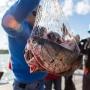 Диетолог назвал самую вредную рыбу