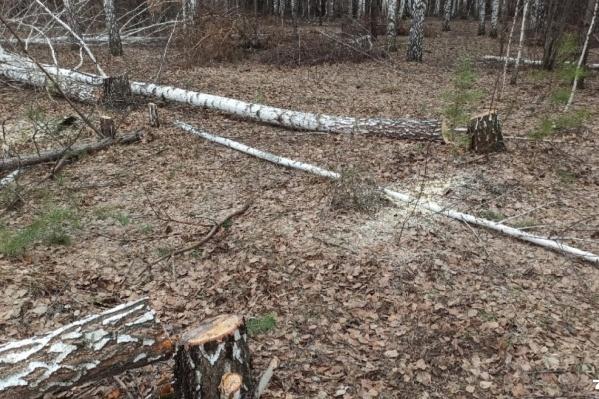 Местные жители боятся, что скоро от леса ничего не останется