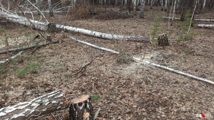 Ночная вырубка деревьев в «Парковом» вылилась в уголовное дело