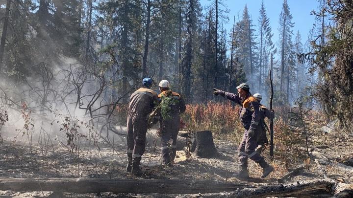 В Башкирии загорелся еще 61 гектар леса