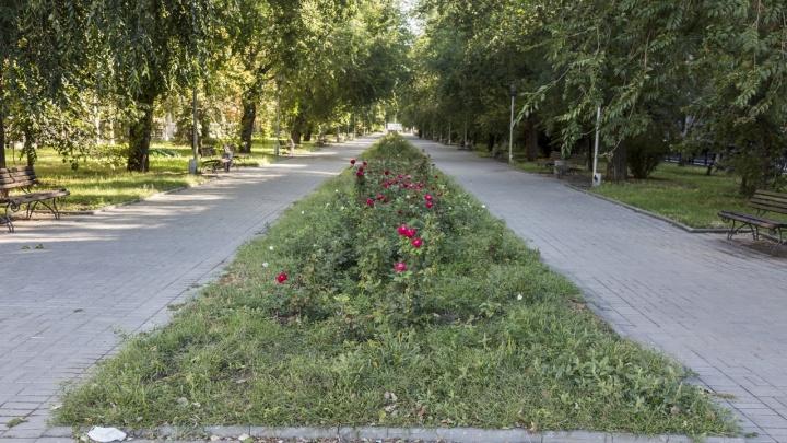 «Мы их не выкапывали»: в клумбах бульварной части волгоградского проспекта Ленина исчезли цветы