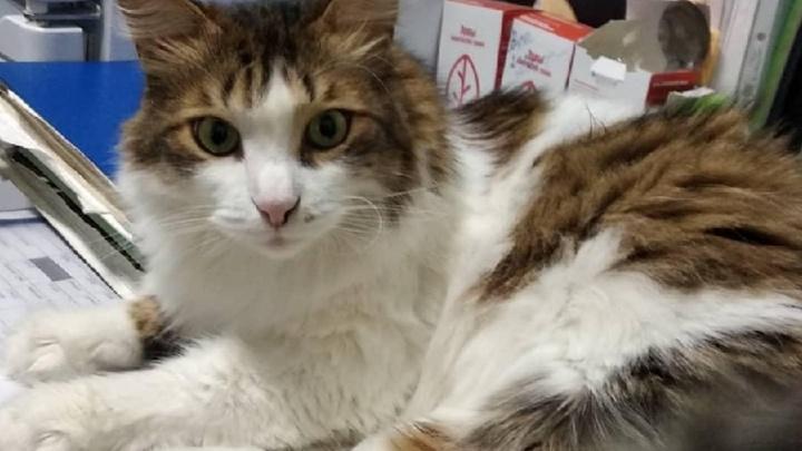 Из пермского зоопарка пропал кот. Сотрудники считают, что его украли
