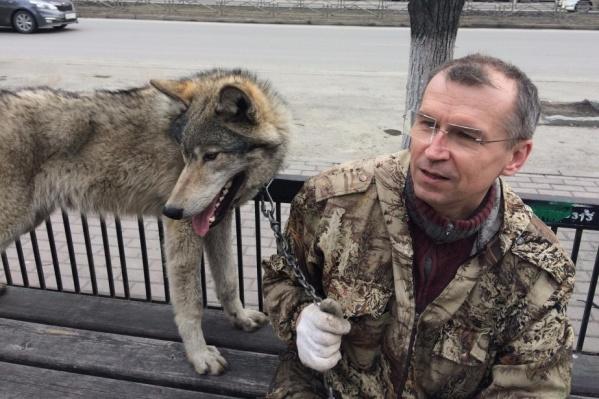 Встретить на улице человека, гуляющего с волком, — обычное дело для челябинцев