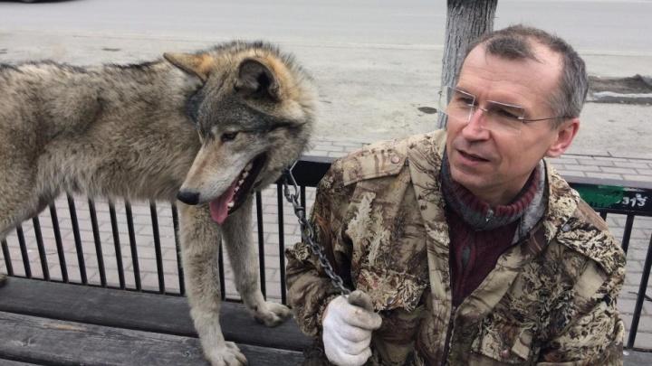 Хоть волком вой. Почему со скандальным зверинцем в центре Челябинска не может справиться ни Текслер, ни Бастрыкин