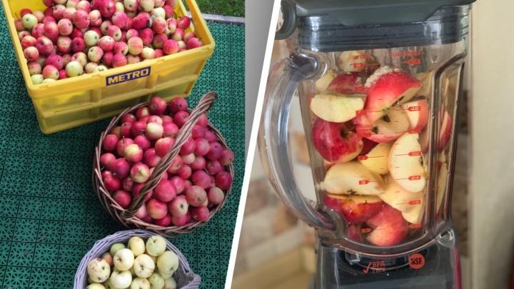 Спасаем яблоки правильно: как приготовить дома вкусную пастилу без лишних сложностей