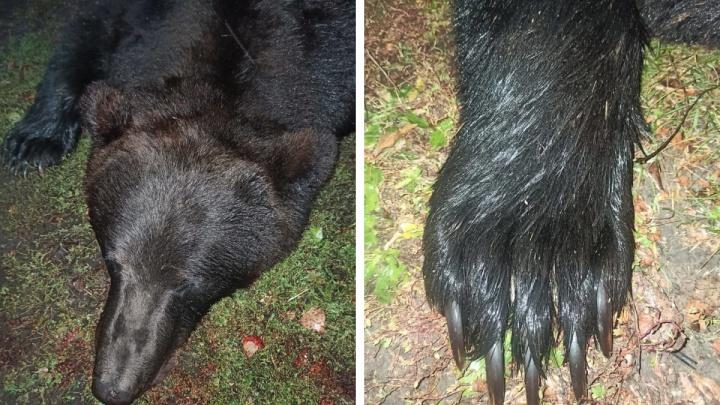 Под Новосибирском медведь пять раз приходил в один и тот же двор — на шестой раз его убили