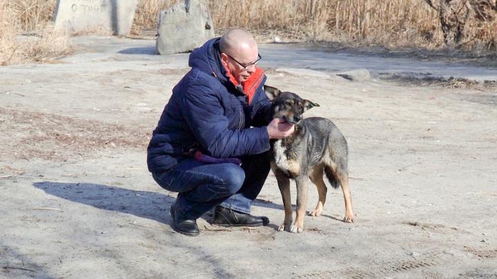 «Я как был в трусах, так и побежал на помощь»: волгоградец рассказал, как спас тонущего пса из полыньи