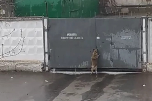Собака оказалась одна у ворот