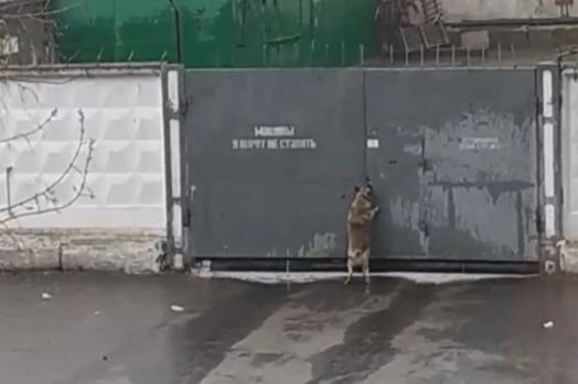 В Ярославле собака, брошенная хозяевами у проходной, отказалась уходить