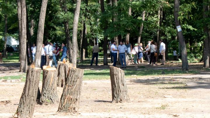 Застройщики в Ростове смогут откупиться от посадки деревьев взамен уничтоженных