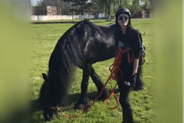 Фризская лошадь невысокая и имеет в холке до 165 см