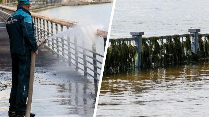Набережные Красноярска начали очищать от речной грязи