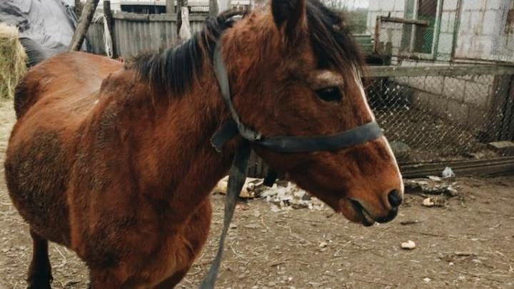 «Очередную сдали на мясо»: в Нижегородской области создают центр реабилитации лошадей