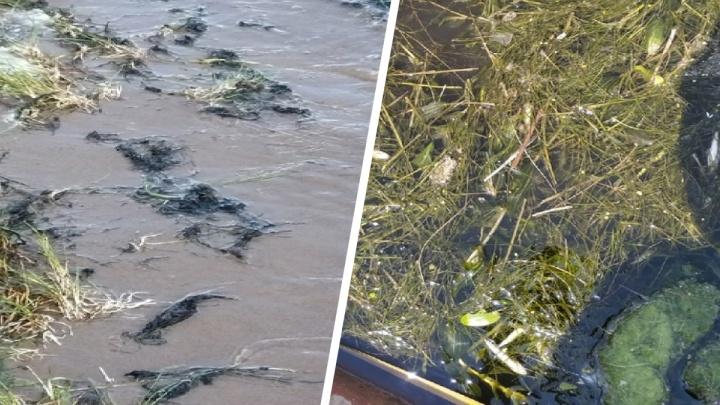 «Плавают на дне и поверхности»: в Самарской области выявили массовую гибель рыбы