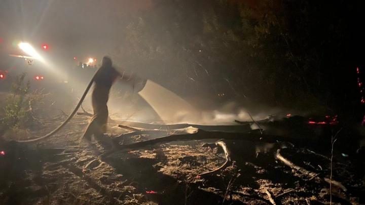 Огонь с деревьев ушел в степь: губернатор Волгоградской области заявил об ужесточении противопожарного режима