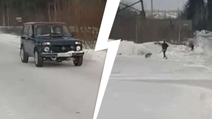 На Урале мужчина расстрелял собаку из охотничьего ружья