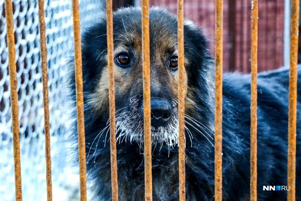 Во время холодов бездомным животным тяжелее найти себе питание и теплое укрытие, из-за чего они могут становиться более агрессивными
