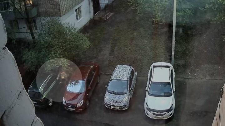 Прыгала за рукой хозяйки: в Ярославле собака набросилась на автомобиль. Видео