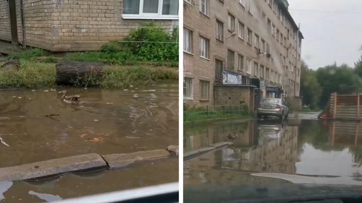 Людям не пройти: у здания полиции в Ярославле растеклась огромная лужа. И в ней поселились утки