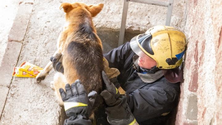 В Уфе пожарные спасли собаку, застрявшую в проеме цокольного этажа, есть видео