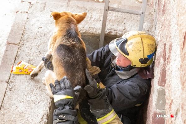 Сколько времени провела собака в ловушке, неизвестно
