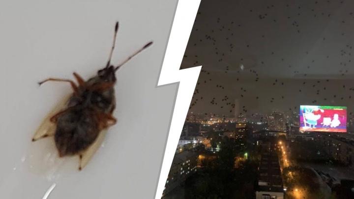 Окна екатеринбуржцев облепили странные жуки. Они летят на свет и воняют