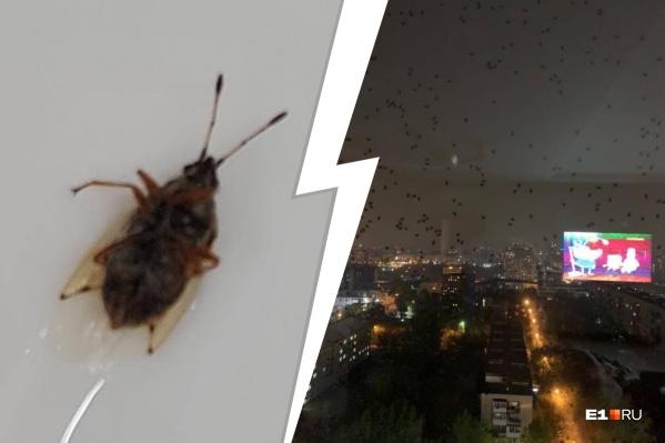 На стеклах скапливаются десятки насекомых