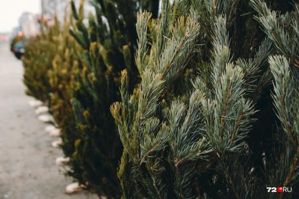 Елки востребованы до Нового года, а после их просто выкидывают. Но деревья можно отдать на благотворительность