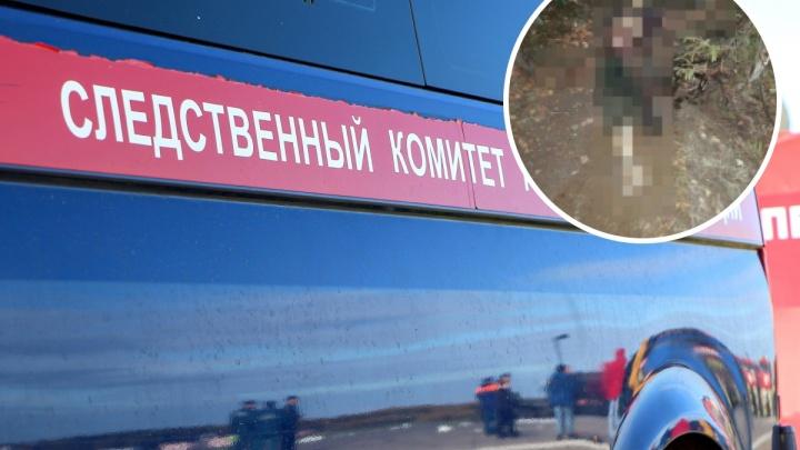 Пастух погиб при загадочных обстоятельствах в Воскресенском районе. Что говорят о происшествии следователи и Минздрав