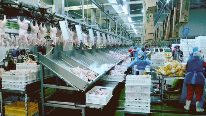 Свердловские власти продают птицефабрику «Рефтинскую». Цена вопроса — 2,5 миллиарда