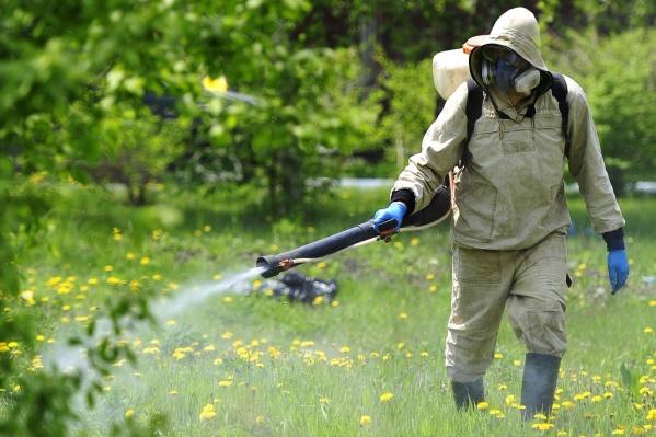 """При благоприятных погодных условиях (без ливней) эффект от акарицидной обработки сохранится на <nobr class=""""_"""">1,5–2 месяца</nobr>"""