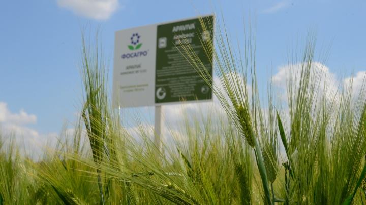 В Зерноградском районе прошла сельскохозяйственная выставка «День Донского поля»