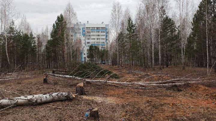 Жителей «Паркового» возмутила вырубка деревьев под покровом ночи. При чем здесь компания депутата