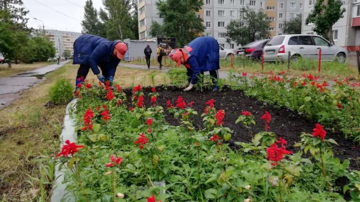 В Омске высадят тропические цветы: сальвии и бальзамины